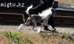 Пропала собака вознаграждение гарантировано!